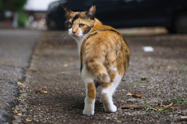 地域猫と野良猫の違いを知ってい...