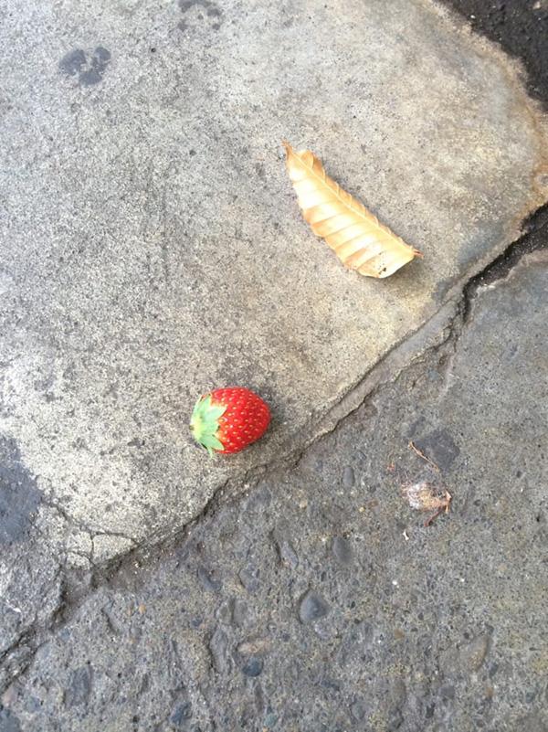 杉並区下井草の路上にて発見。いったい何のメッセージがあるのか?(写真/ダーシマ)