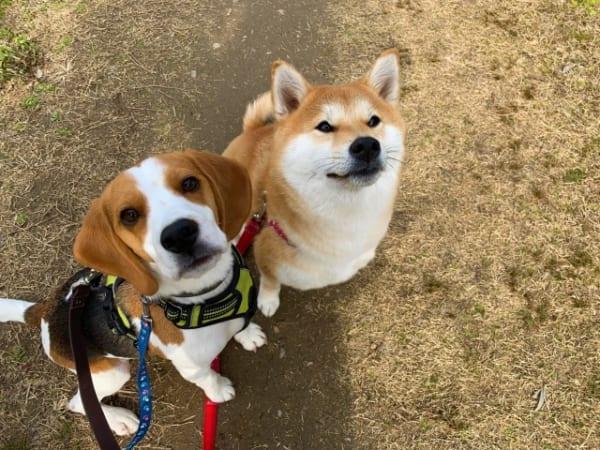 狂犬病予防注射 を人ではなく 犬に接種するのはなぜ 日本に潜伏