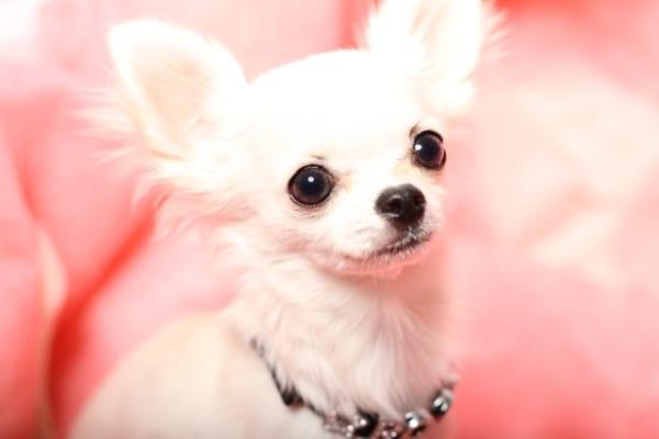 動物タレントは紀元前からいた?日本ではペットモデルが社会に浸透 ...