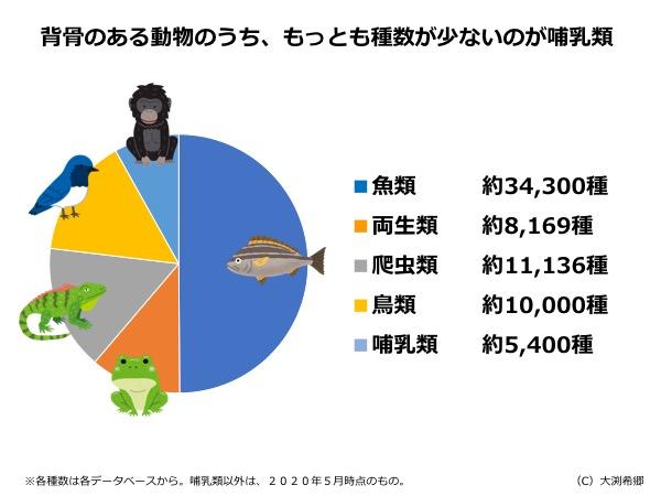 哺乳類は脊椎動物の中でも少数派。