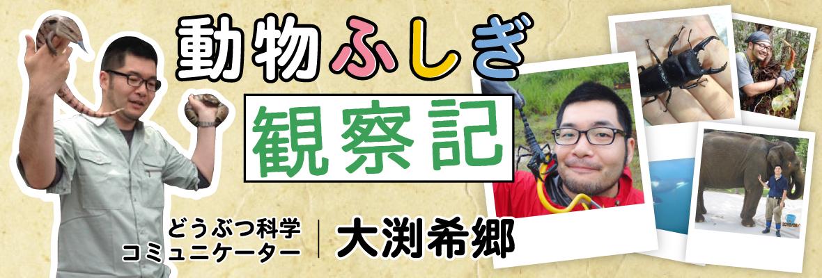 大渕希郷「動物ふしぎ観察記」