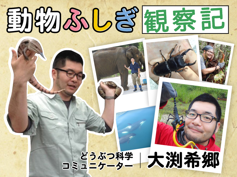 ライオン ぺ ニス トゲ