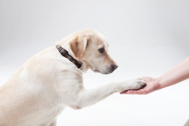 こんなに長い間、人間を慕って支えてきたのに、ことわざ界では信用されていない犬。(イメージ画像/写真AC)