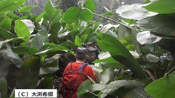 コンゴのうっそうとした熱帯森。ボノボを探して入った森でハチとも出会ってしまった。