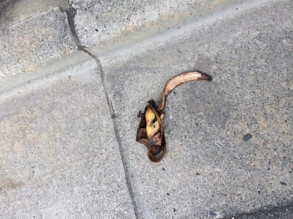 都内の路上にて発見したバナナ(皮だけ)。これはツルっといっちゃうので注意が必要だ。(写真/ダーシマ)