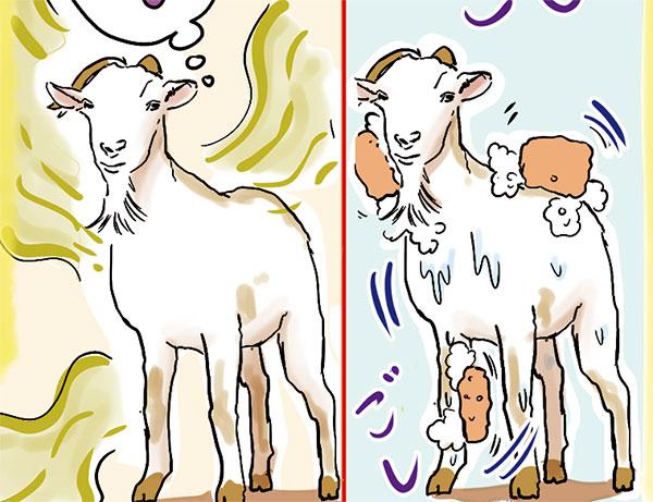 連載第19回「ヤギをいくら洗ったとしてもヤギのにおいはそのまま」★写真クリックで連載ページへリンクします