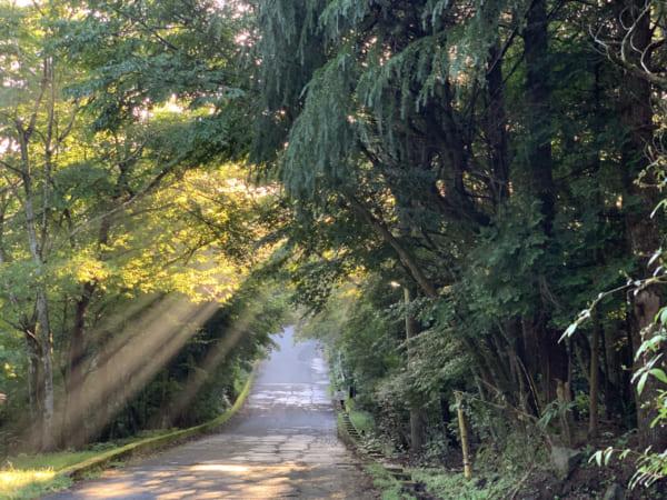 犬を連れて朝の散歩。ハッと立ち止まるほど美しい木漏れ日が。
