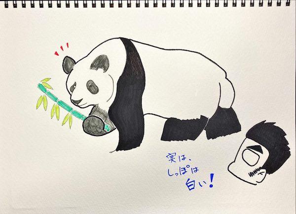 意外と正しく記憶している人が少ない、パンダの体の黒い部分と白い部分。(イラスト/大渕希郷)
