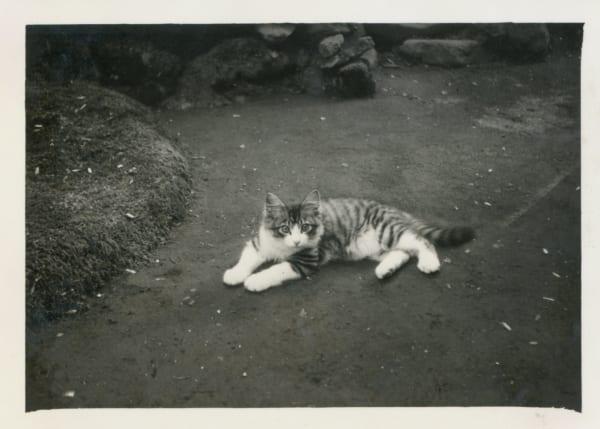 軽井沢で出会った三毛猫、カメチョロ(写真提供/室生犀星記念館)