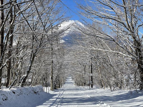 降ったら降ったで大変だけど、やっぱり待ち遠しい雪景色