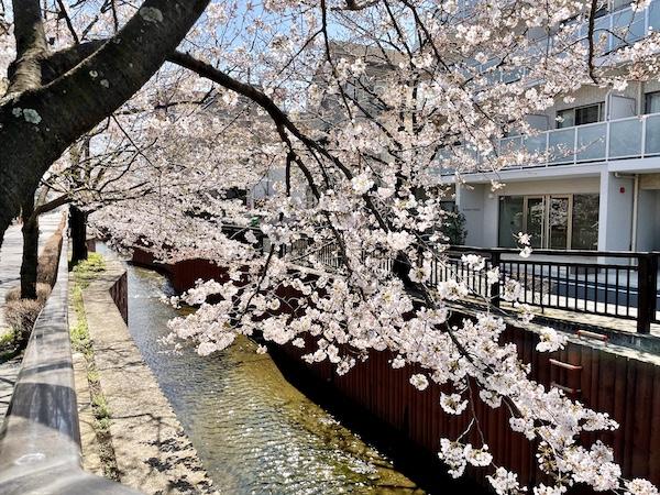 東京は春本番なのに……。