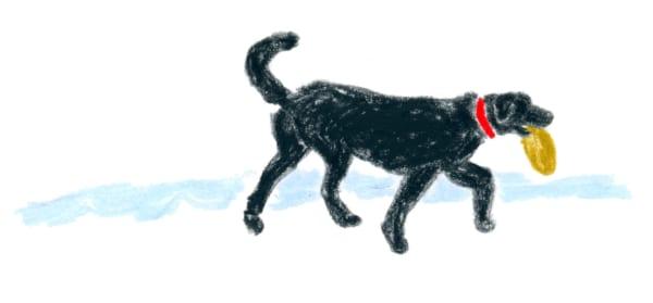 村井さんの愛犬は黒ラブのハリーくん。(イラスト/塩川いづみ)