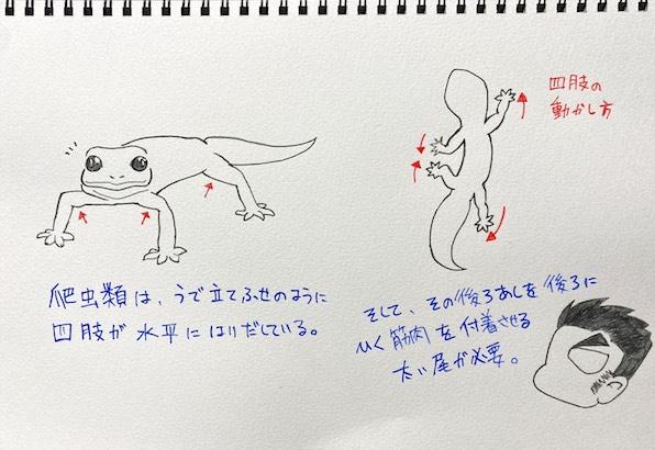 爬虫類の尾は、脚を後ろに動かすために必要な筋肉とつながっている。(イラスト/大渕希郷)