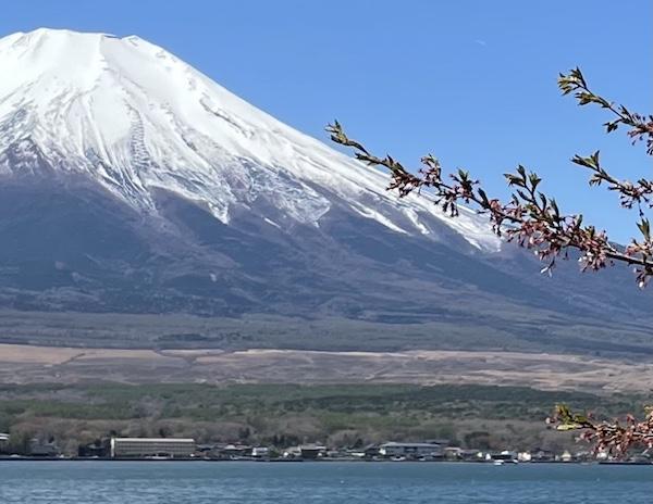富士山の麓一体、帯状に茶色く見えるのが北富士演習場
