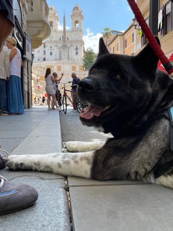 ローマの休日を満喫するクマちゃん