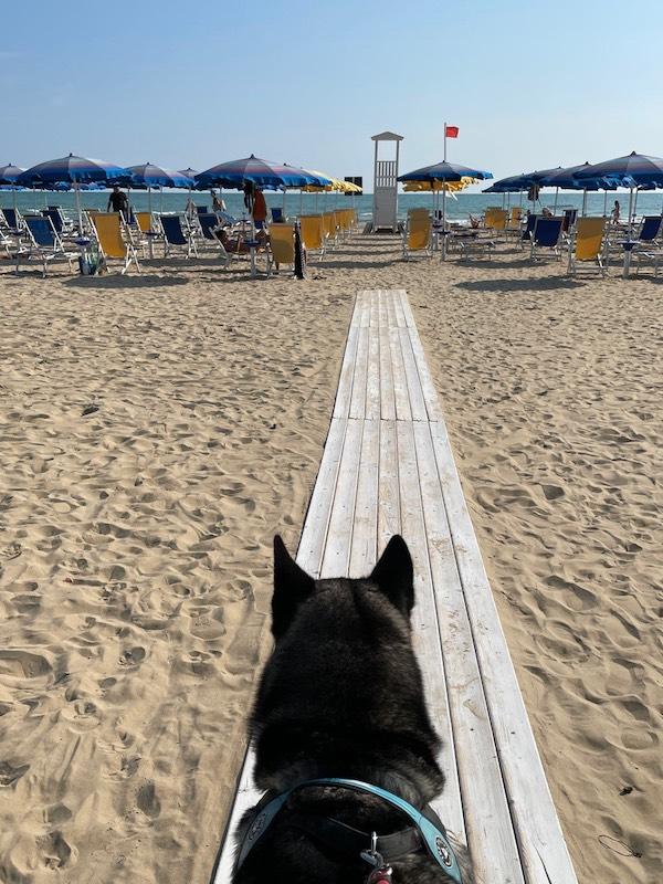 クマちゃんとビーチへ