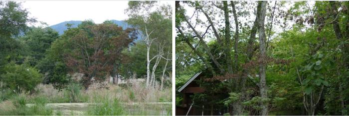 頭の照準が合うと、ナラ枯れの木が次々に見つかる