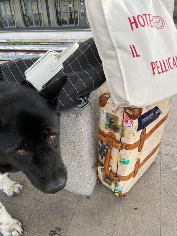 いつもの旅行鞄、ヴァレクストラのバッグとクマちゃん。ミラノから列車で約5時間のアドリア海沿いの町、テルモリの駅にて